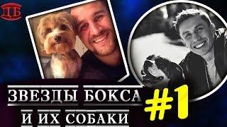 Собаки лучших боксеров мира #1 |  ПРО БОКСЕРОВ
