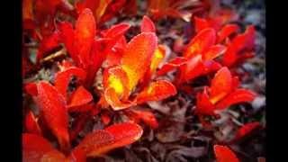 tunturisatu raimo piipponen ja tulipunaruusut
