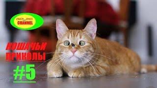 ★ КОШАЧЬИ ПРИКОЛЫ # 5 ! ★ CAT JOKES # 5  !