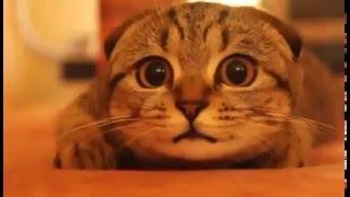 кот любит ужасы.