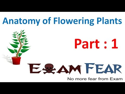 Biology Anatomy of Flowering Plants part 1 (Introduction) CBSE class 11 XI