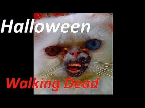 the walking dead ghostface killah hd funny cat in halloween meo cover home - Funny Cat Halloween