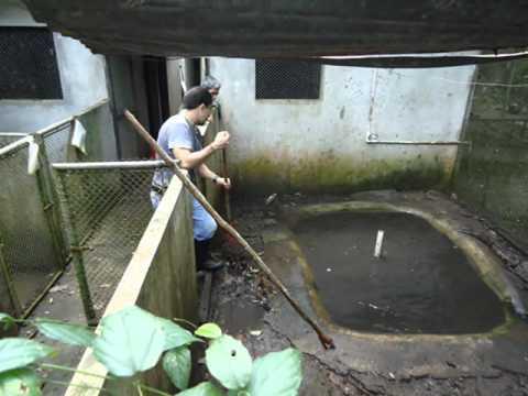 ARCAS WILDLIFE PROTECTION GUATEMALA