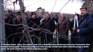 Pokaz cięcia jabłoni 1/3 w sadzie Brzezna - dr Mirosław Sitarek