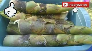 Como Preparar o Broto de Bambu para o Consumo
