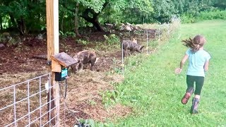 What Happened to Our PIGS | I came home from work to this