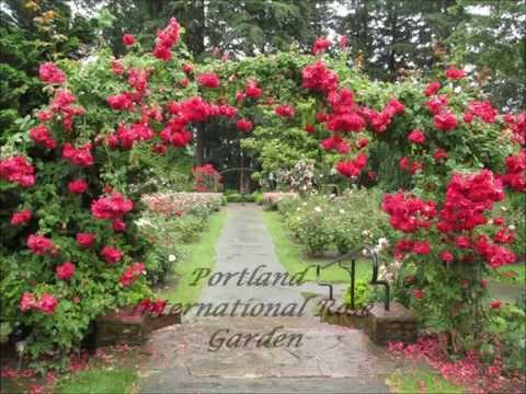 Portland International Rose Garden: After the Storm Flowers [HD]