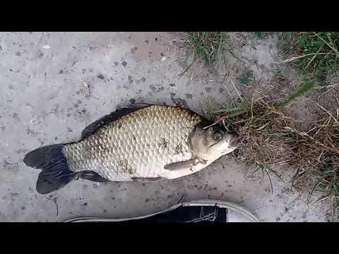 Рыбалка на корку