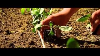 Floralux moestuinprogramma: Trailer Eigen Kweek