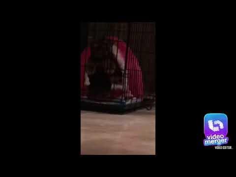 1000 iq dog escapes kennel