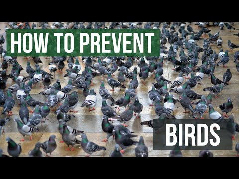 How To Keep Birds Away From Your Building Or Property