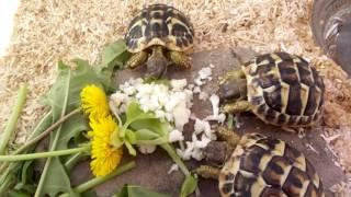 Что едят черепахи? | Уход за черепахами.