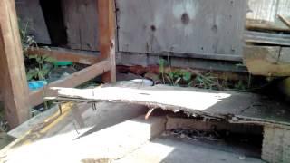 Собачки грызуны VID_20160618_135001.3gp