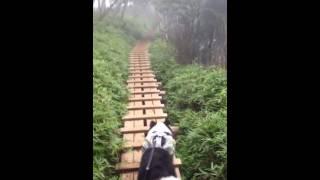 ボーダーコリー、レオ君と大山登山の木道でのひと時です!