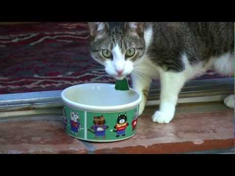 bayer-advantage-ii-for-cats