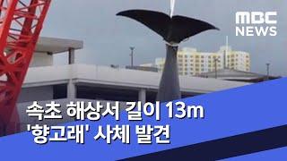 속초 해상서 길이 13m '향고래' 사체 발견 (202…