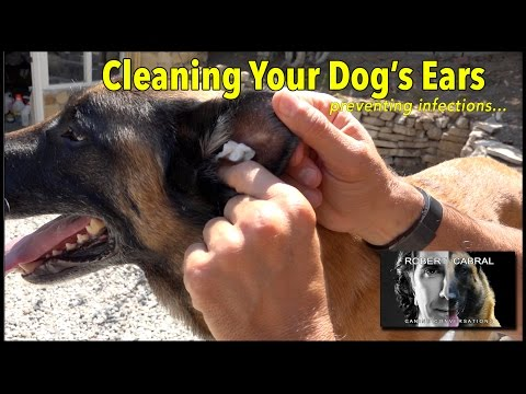 Cleaning Your Dog's Ears - Dog Training, Hygiene and Health