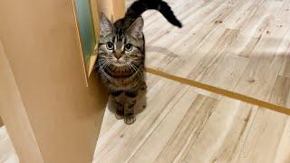 帰宅したら寂しがりの猫が痺れを切らして待っていました