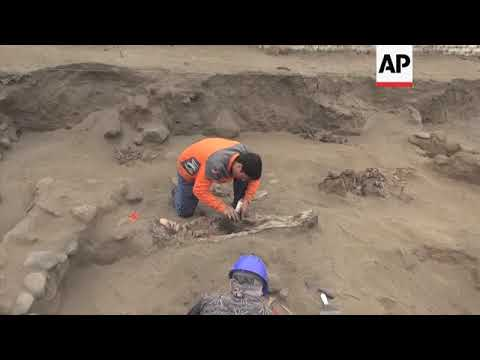 Remains of 30 children, 150 llamas killed in ancient sacrifice found in Peru