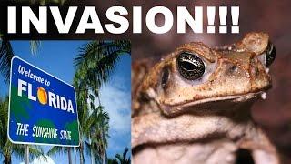 Cane Toads Invade Florida!