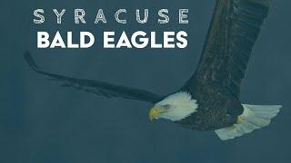 Syracuse Bald Eagles (Onondaga lake) January 2021 - Fishing and Fighting
