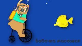 Животные моря Мишка Топа Веселые песенки для детей