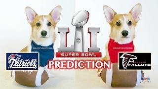CUTE PUPPY PREDICTS WHO WILL WIN SUPER BOWL 51 - Falcons vs. Patriots