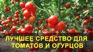 Лучшее Средство для Томатов и Огурцов, Подкормка и Защита.