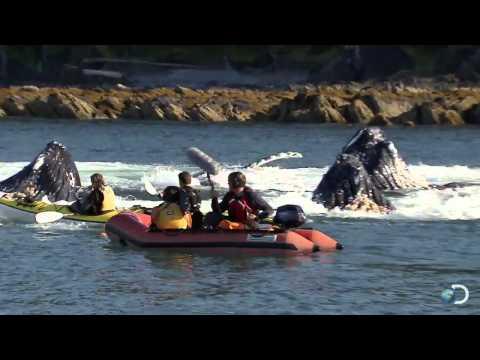 кит перевернул лодку