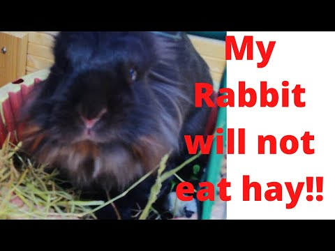 What Hay To Feed My Rabbit!!