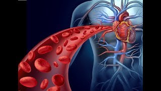 Hindi en sistema sanguíneo