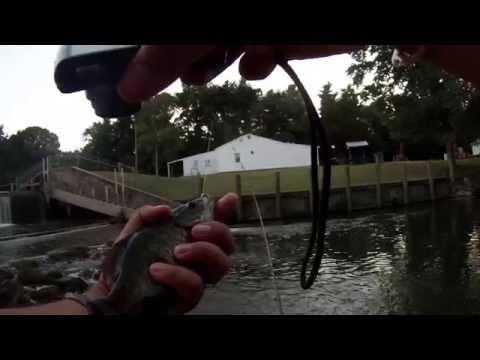 Multi-Species Fishing around the Chesapeake Bay (Maryland)