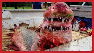 WORLD BIGGEST PET- Top 10 Dangerous Sea Monsters Ever! 10 Most Bizarre Deep Sea Creatures