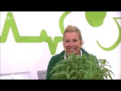 ZDF-Fernsehgarten: natürliche Mittel bei Mehltau, Gespinstmotten, Minzkäfern und Läusen bei Pflanzen