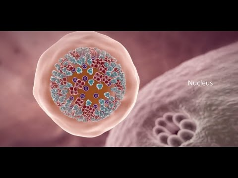 COVID-19 Animation: What Happens If You Get Coronavirus?