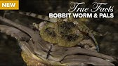 True Facts: Bobbit Worm and Polychaete Pals