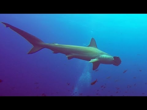 Galápagos Diving Highlights- February 2015 with Blue Planet DC