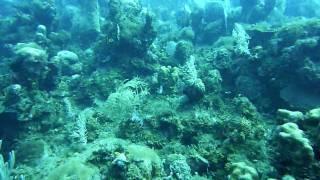 Cuba, Baconao - Reef - Part 3