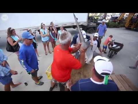 MS Deep Sea Fishing Rodeo Kicks Off With Record Breaking Shark