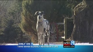 Dog saves neighbor 89 with broken hip