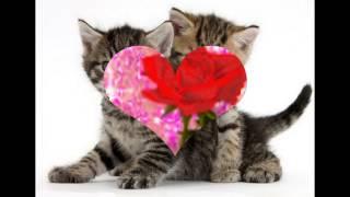 Еда,красовки,котята,всё что нужно для жизни!!!