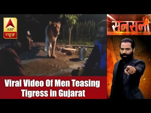 Sansani: Video Of Men Teasing Tigress in Gujarat Goes Viral | ABP News