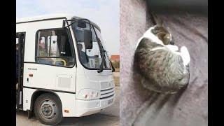 В керчи кошка родила котят в маршрутке