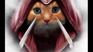 нарезка котята ассасины
