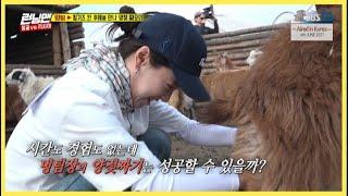 [RUNNINGMAN THE LEGEND] [EP 353-2Mongolia]   Ji Hyo lacks time WIll she succeed in milking?(ENG SUB)
