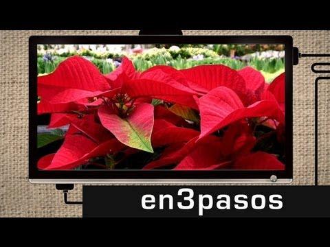 Cómo Cuidar La Planta De Navidad Youtube