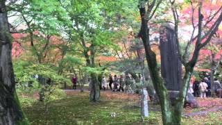 Tofukuji Temple - Fall/Autumn 2015