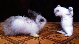 Funny & Crazy Animals Will Make You Non Stop Laughing, Funny Animal Videos, Animals TV