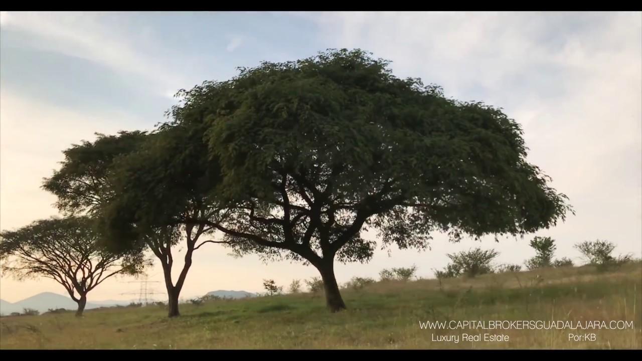 Rancho En Venta 100 Hectareas En Villa Corona Jalisco Youtube
