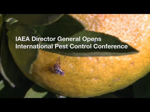 Using Nuclear Technology to Tackle Insect Pests